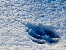Persiga a pegada na neve fresca em Fontecerro Rieti Itália Imagem de Stock Royalty Free