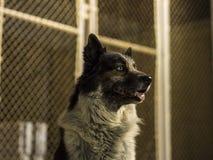 Persiga sentarse delante de una cerca de chainlink en la noche Fotografía de archivo