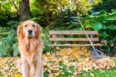 Persiga sentarse en la escena, las hojas y el banco del otoño Imágenes de archivo libres de regalías