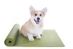 Persiga sentarse en una estera de la yoga, concentrando para el ejercicio imágenes de archivo libres de regalías
