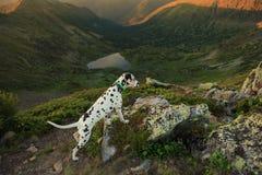 Persiga sentarse en una roca por un lago de la montaña Foto de archivo