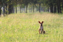 Persiga sozinho Fotografia de Stock