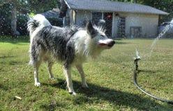 Persiga ter o divertimento com água no quintal fotos de stock