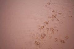 Persigue huellas en la arena Imagen de archivo libre de regalías