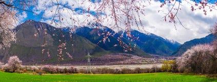 Persikablomning och höglandkornfält i tibetan by arkivbild