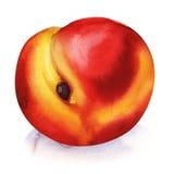 Persikafrukt som isoleras på vit vektor illustrationer