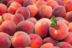 Persikafrukter Arkivbild
