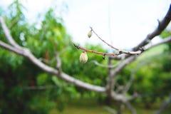 Persikafruktträdgård 16 Royaltyfri Foto