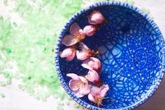 Persikan blommar att sväva i en blå keramisk bunke Fotografering för Bildbyråer
