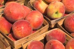 persikor Arkivbild