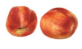 persikor Hand dragen vattenfärgmålning Arkivbilder