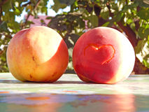 Persikor i trädgården Royaltyfri Fotografi