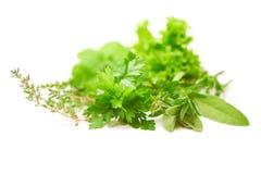 Persil, céleri, sauge, thym, feuille de laitue, feuilles fraîches sur le fond blanc Image libre de droits