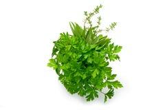 Persil, céleri, sauge, thym, feuilles fraîches sur le fond blanc Image stock