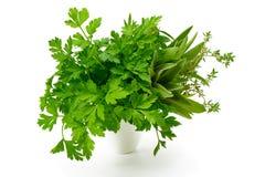 Persil, céleri, sauge, thym, feuilles fraîches sur le fond blanc Photographie stock libre de droits