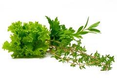 Persil, céleri, sauge, thym, Rosemary, feuille de laitue, feuilles fraîches sur le fond blanc Photographie stock