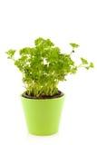 Persil dans le bac de fleur vert image stock