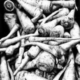 Persil Regard artistique en noir et blanc Images stock