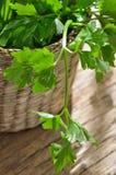 Persil vert et organique images stock