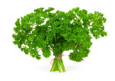 Persil vert frais Image stock