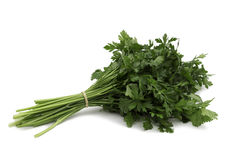Persil vert frais Photo stock