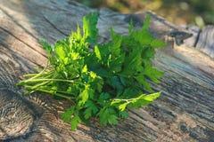 Persil vert frais sur une table en bois, coupe dans le jardin de ville Foyer sélectif images stock