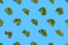 Persilja på blå bakgrund Royaltyfri Foto