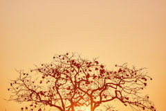 Persimmon δέντρο Στοκ Φωτογραφία