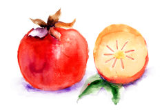 Persimmon, απεικόνιση watercolor Στοκ Φωτογραφία