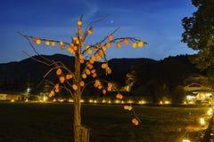 Persimmon φως δέντρων επάνω και ελαφρύ φεστιβάλ στην περιοχή Arashiyama Στοκ εικόνες με δικαίωμα ελεύθερης χρήσης