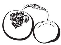 persimmon royaltyfri illustrationer