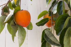 persimmon Fotos de Stock