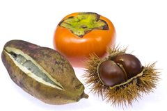 Persimmon chestnut and chocolate vine Stock Images