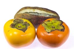 Persimmon and chocolate vine Stock Image