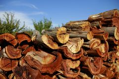 Persimmon Firewood. Split Persimmon firewood piled in a field to dry through the summer Stock Image