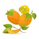 Persimmon and flower vector objects Royalty Free Stock Photo