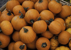 Persimmon fruit Stock Images
