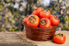 Persimmon fruit in a wicker basket on a wooden table with blurred garden background.  Stock Photos