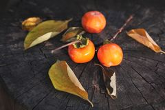 Persimmon fruits and leaves royalty free stock images