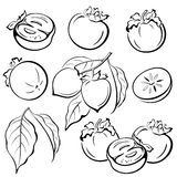 Persimmon Fruits and Leaves Pictograms Royalty Free Stock Photography