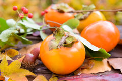 Persimmon harvested in autumn Stock Photo