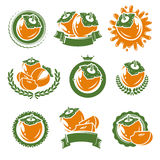 Persimmon labels and elements set. Vector Stock Photo