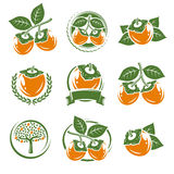 Persimmon labels and elements set. Vector Royalty Free Stock Image