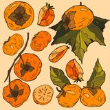 Persimmon , Persimmon Vector. Composition of Persimmon on beige background. Persimmon icon, fruit set. Fruit Composition f Royalty Free Stock Photography