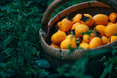 Persimmon on retro desk in basket. Persimmon tree ( kaki ) with fruits Stock Photos