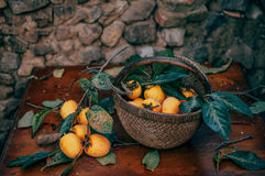 Persimmon on retro desk in basket. Persimmon tree ( kaki ) with fruits Stock Images