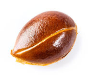 Persimmon seed Stock Photography