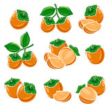 Persimmon set. Vector Stock Photography