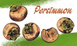Persimmon sketches set Stock Image