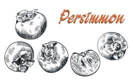 Persimmon sketches set Royalty Free Stock Photos